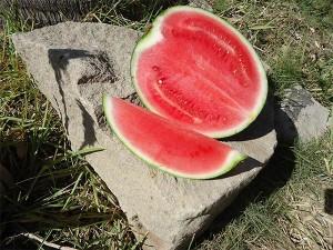 Melone-mit-emko-produktion-plan-verde