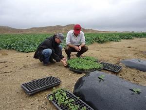 Melonenplantage-mit-emko--plan-verde